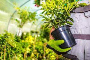 gardeningslide2